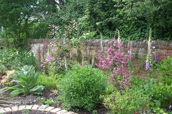 foxgloves dot the new flowerbed